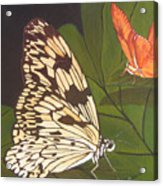 Cream And Orange Butterflies Acrylic Print