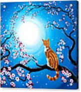 Creamsicle Kitten In Blue Moonlight Acrylic Print