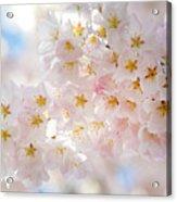 Creamy Blossoms Acrylic Print