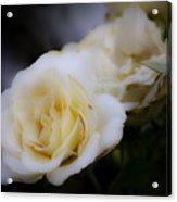 Creamy Dreamy Rose Acrylic Print