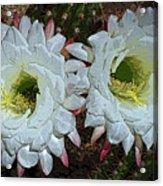 Created By A Cactus Acrylic Print