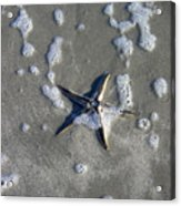 Creatures Of The Gulf - A Fallen Star Acrylic Print