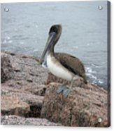 Creatures Of The Gulf - His Best Side Acrylic Print