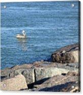 Creatures Of The Gulf - Pelican Landing Acrylic Print