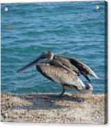 Creatures Of The Gulf - Scratch N' Sniff Acrylic Print