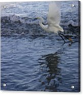 Creatures Of The Gulf - Take Off At Dusk Acrylic Print