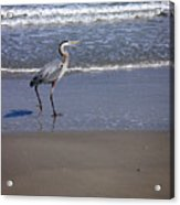 Creatures Of The Gulf - Walk This Way Acrylic Print