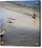 Creatures Of The Gulf - Which Way Acrylic Print