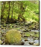 Creek 3 Acrylic Print