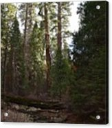 Creek And Giant Sequoias In Kings Canyon California Acrylic Print