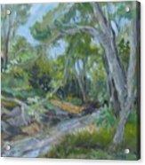 Creek At Linn Haven Acrylic Print