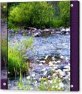 Creek Daisys Acrylic Print