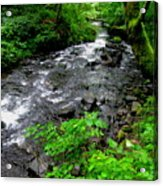 Creek Flow Acrylic Print