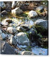 Creek Reflections 1 Acrylic Print