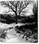 Creekside Winter Acrylic Print