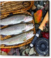 Creel With Native Trout  Acrylic Print
