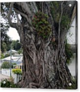 Creepy Tree Acrylic Print