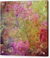 Crepe Garden 1776 Idp_2 Acrylic Print