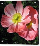 Crepe Paperflowers Acrylic Print
