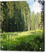 Crescent Meadow In Sequoia Acrylic Print