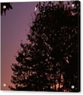 Crescent Moon And Tree Silhouette At Dusk Acrylic Print