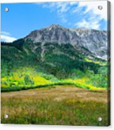 Crested Butte Aspens Acrylic Print