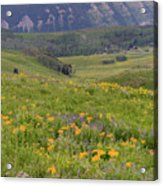 Crested Butte Valley Acrylic Print