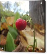 Crimson Berry Acrylic Print