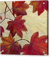 Crimson Branch Acrylic Print