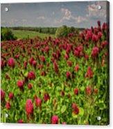 Crimson Clover Patch Acrylic Print