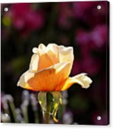 Crimson Gold Lavender Acrylic Print
