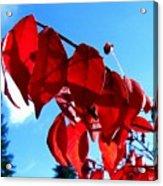 Crimson Hill Acrylic Print