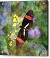 Crimson Longwing Butterfly 8231 Idp_2 Acrylic Print
