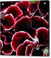 Crimson Propellers Acrylic Print