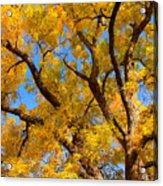 Crisp Autumn Day Acrylic Print