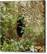 Critter Hole Acrylic Print