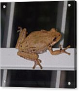 Critters 8-1 Acrylic Print