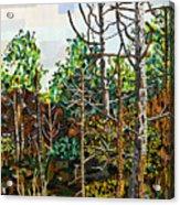 Croatan Forest 1 Acrylic Print