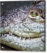 Crocodile Eye Acrylic Print
