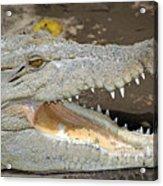 Crocodile Rock Acrylic Print
