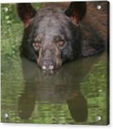 Crocodile Wannabe Acrylic Print