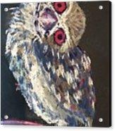 Crooked Owl Acrylic Print