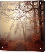 Crooked Path Acrylic Print