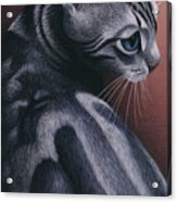 Cropped Cat 1 Acrylic Print by Carol Wilson