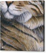 Cropped Cat 6 Acrylic Print