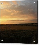 Crops At Sunset Acrylic Print