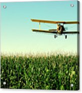 Crops Dusted Acrylic Print