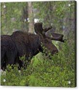 Cross Moose Acrylic Print