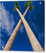 Crossed Palm Trees Acrylic Print