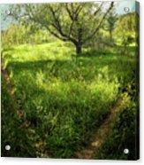Crossing Paths Acrylic Print